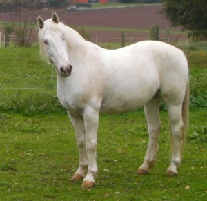 Nantan:  geboren 1994 , auf einer Wiese in Braunfels.  Schecke(haupsächlich weiß), Wallach, ca.150 cm Wiederristhöhe.  Seit 2007 beidseitig  blind.  Gestorben am 18. Mai 2013,   auf einer Wiese in Löh
