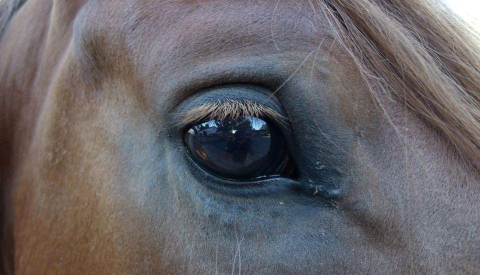 Auge aussehen blindes Blinde mit